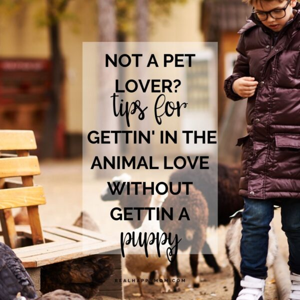 Not a Pet Lover? Tips for Gettin' in the Animal Love WITHOUT Gettin a Puppy!