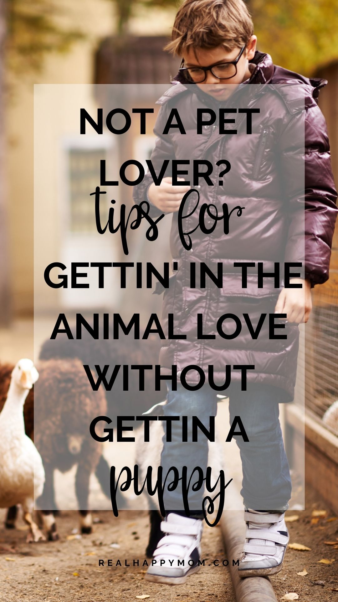 Not a Pet Lover? Tips for Gettin\' in the Animal Love WITHOUT Gettin a Puppy!